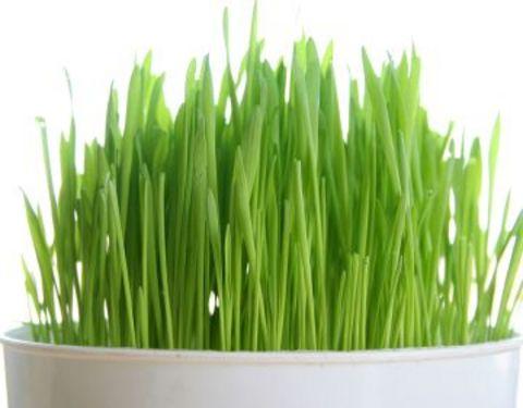 prostat hastalığına iyi gelen bitkiler